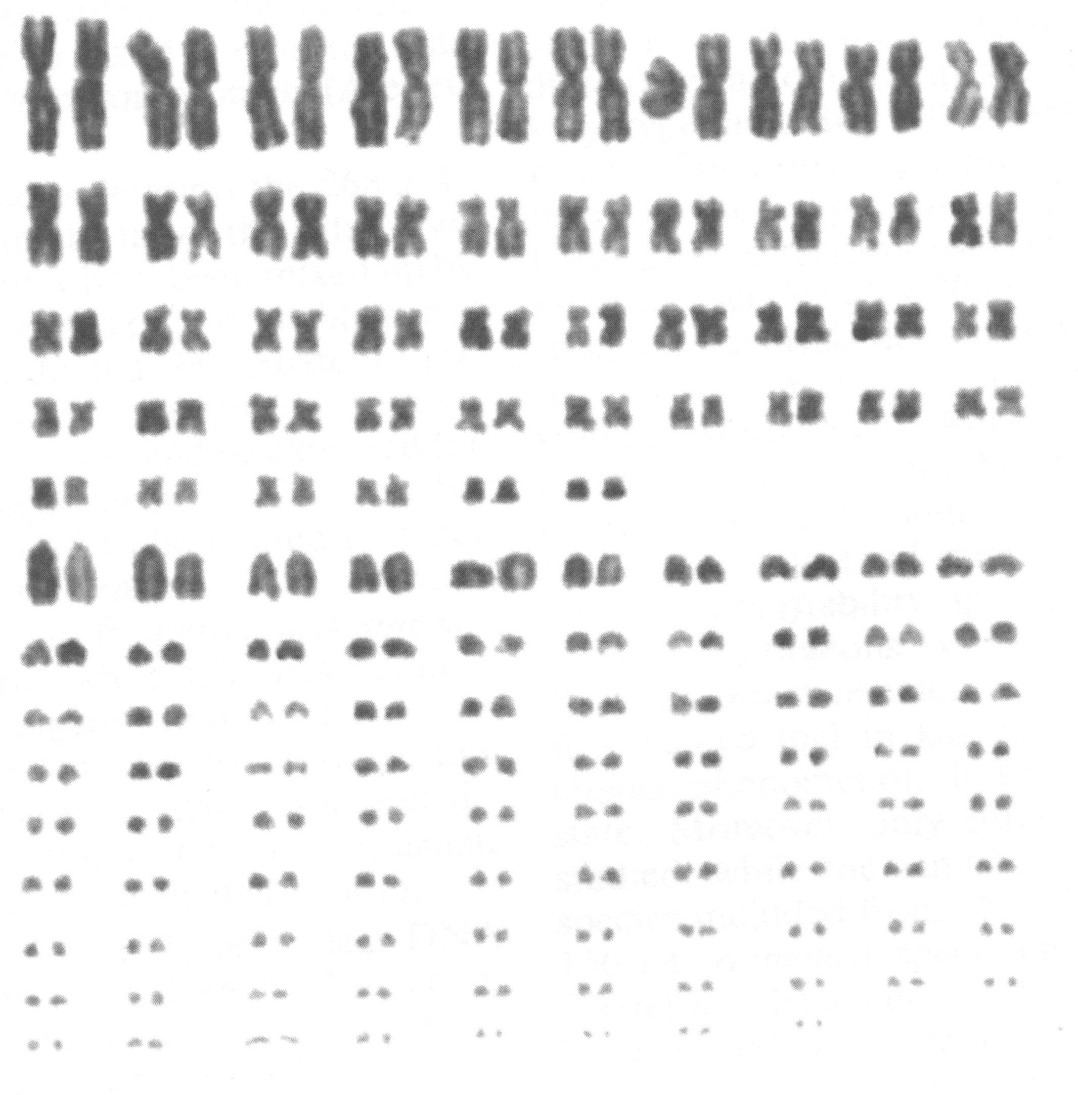 copy_of_schrencki001.jpg
